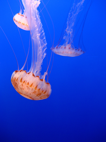 Jelly. Photo by Creative Holly